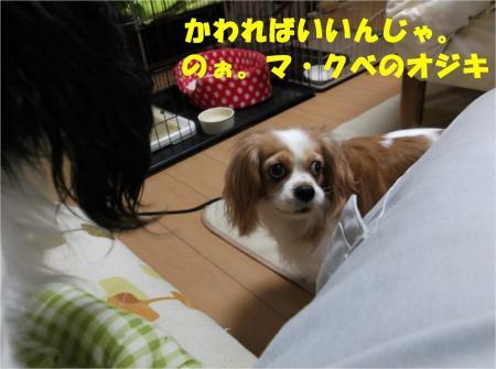012_convert_20121212175531.jpg