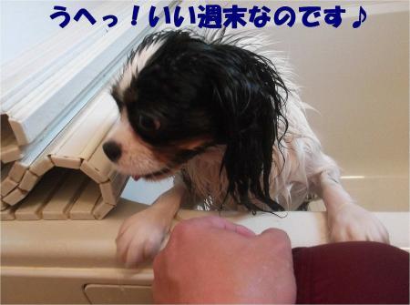 012_convert_20121217164725.jpg