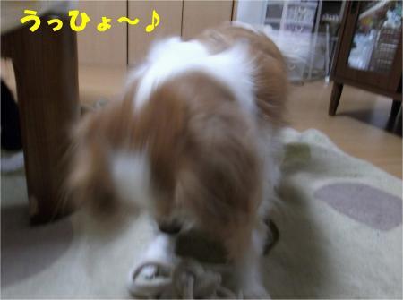 01_convert_20121212175310.jpg