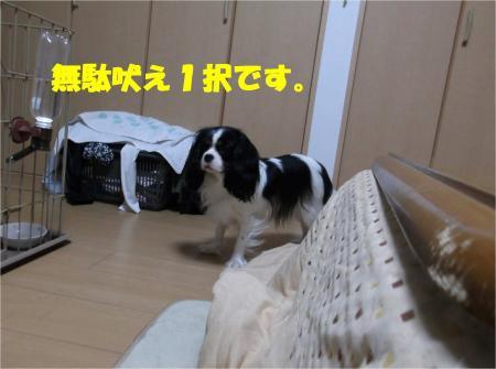 01_convert_20121213172342.jpg