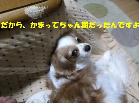 01_convert_20121220184605.jpg