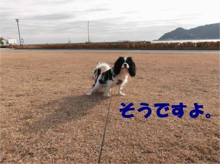 01_convert_20121224172556.jpg