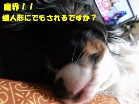 01_convert_20131218192340.jpg