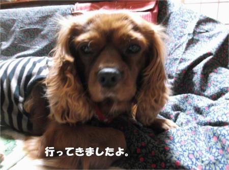 01_convert_20131219201221.jpg