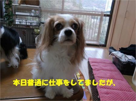 01_convert_20131226195049.jpg