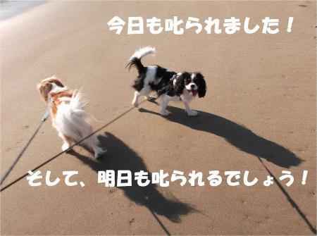 027_convert_20121217164908.jpg