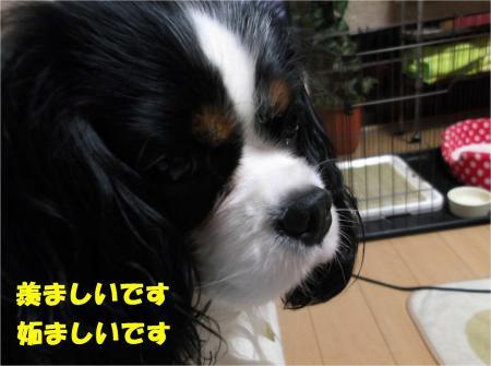 02_convert_20121212175325.jpg
