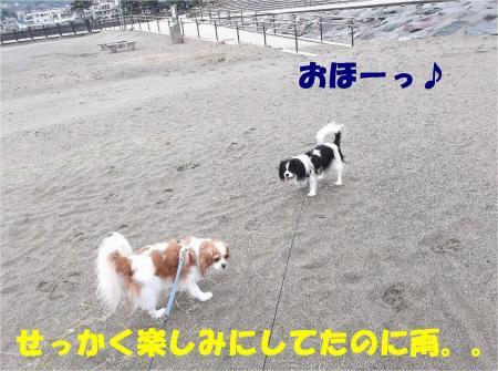 02_convert_20121217164518.jpg