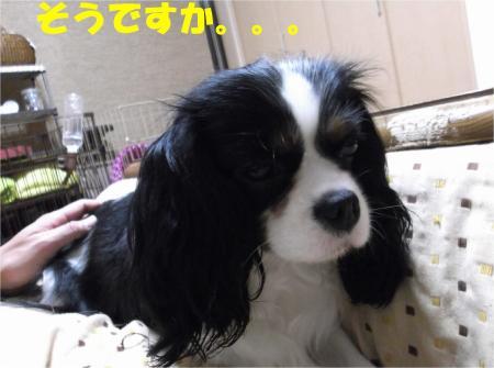 02_convert_20121221181907.jpg