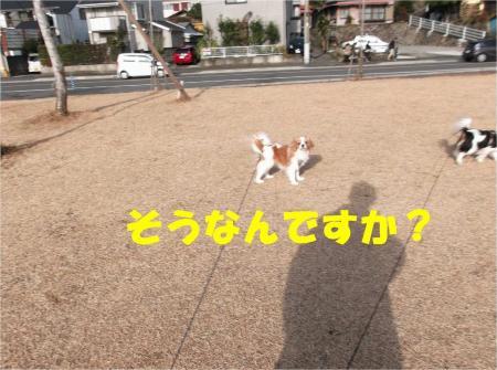 02_convert_20121224172610.jpg