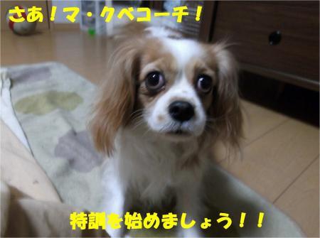 02_convert_20121225173850.jpg