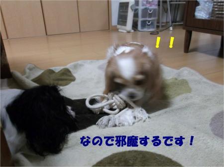 03_convert_20121212175338.jpg