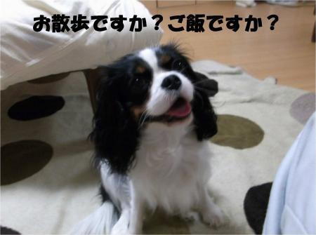 03_convert_20121214185250.jpg