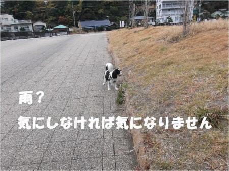 03_convert_20121217164532.jpg