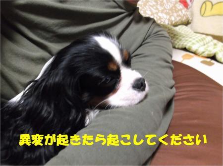 03_convert_20121221181919.jpg
