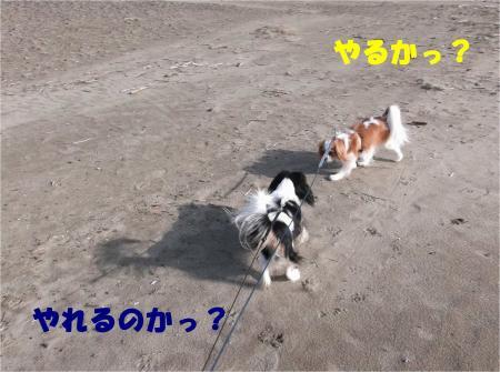 03_convert_20121224172623.jpg