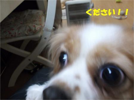 03_convert_20121226170931.jpg