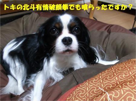03_convert_20131213183800.jpg