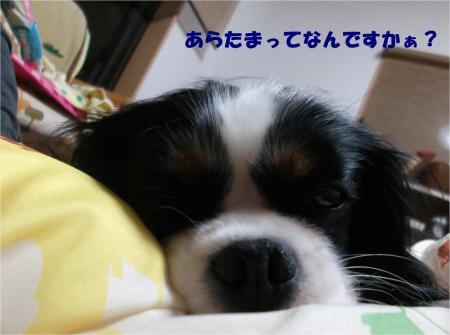 03_convert_20131217183444.jpg