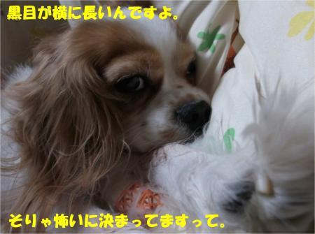 03_convert_20131218192400.jpg