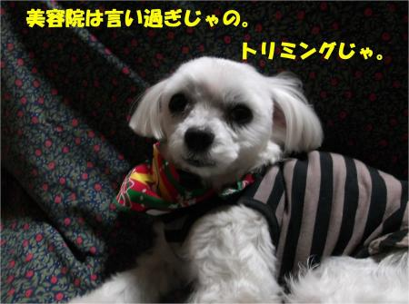 03_convert_20131219201240.jpg