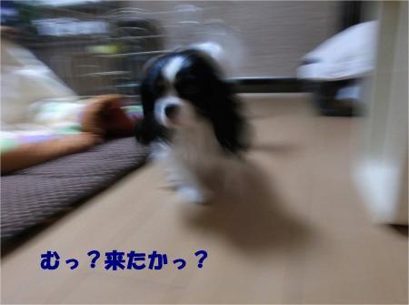 03_convert_20131224181237.jpg
