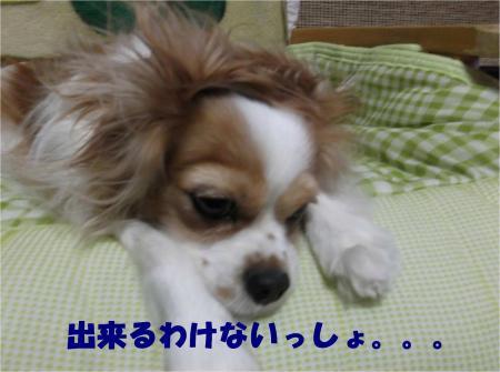 04_convert_20121213172425.jpg