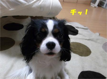 04_convert_20121214185303.jpg
