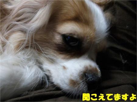04_convert_20121219180317.jpg