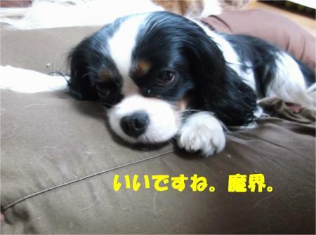 04_convert_20131218192418.jpg