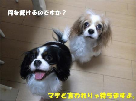 04_convert_20131220181823.jpg
