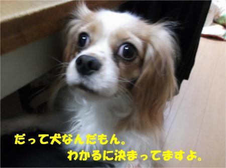 04_convert_20131225202021.jpg