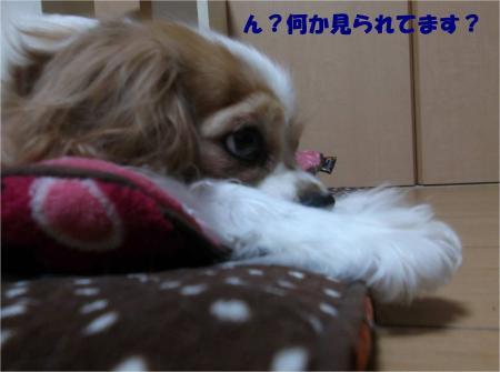 04_convert_20131227190904.jpg