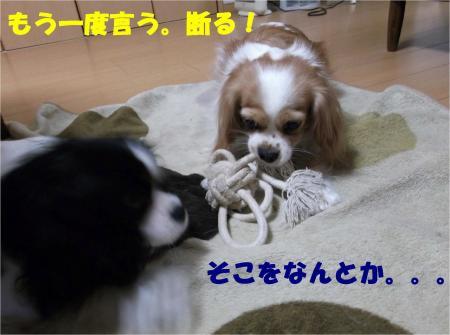 05_convert_20121212175403.jpg