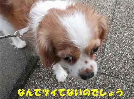05_convert_20121217164559.jpg