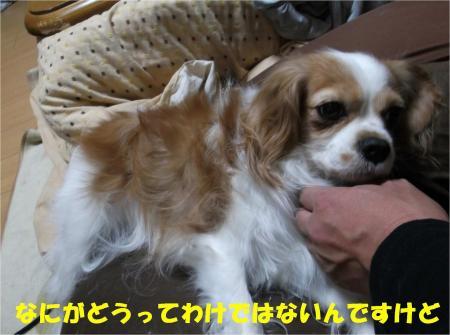 05_convert_20121219180330.jpg