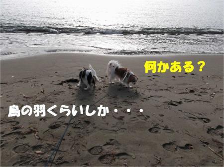 05_convert_20121224172649.jpg
