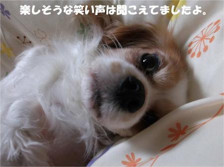 05_convert_20131213183821.jpg