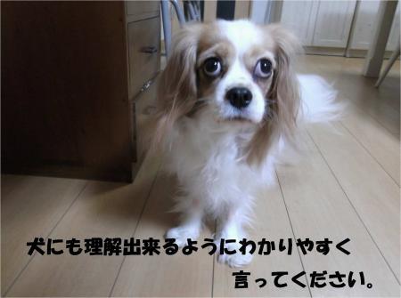 05_convert_20131224181335.jpg