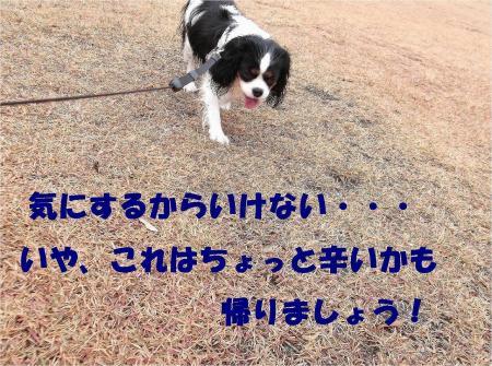 06_convert_20121217164612.jpg