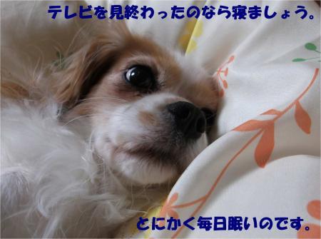 06_convert_20131213183831.jpg
