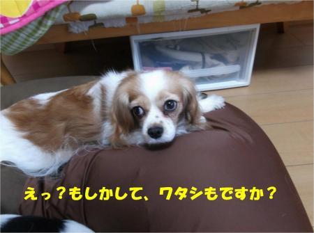 06_convert_20131217183522.jpg