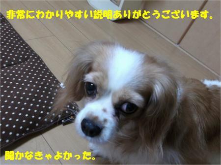 06_convert_20131224181345.jpg