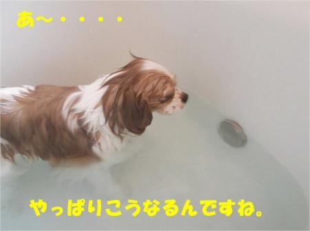 07_convert_20121217164624.jpg