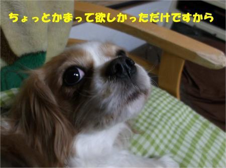 07_convert_20121219180354.jpg