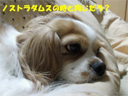07_convert_20121220184720.jpg