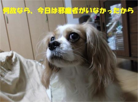 07_convert_20121225173959.jpg