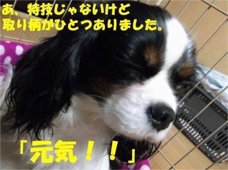 08_convert_20121213172527.jpg