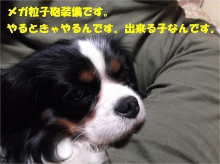 08_convert_20121221182038.jpg