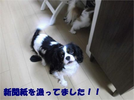 08_convert_20121225174012.jpg